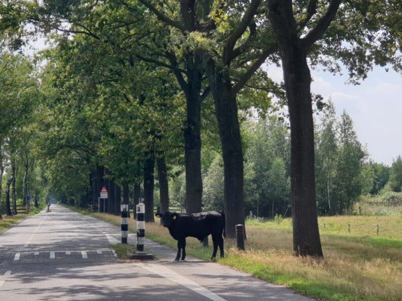 Mooie en leuke autoroutes in Nederland