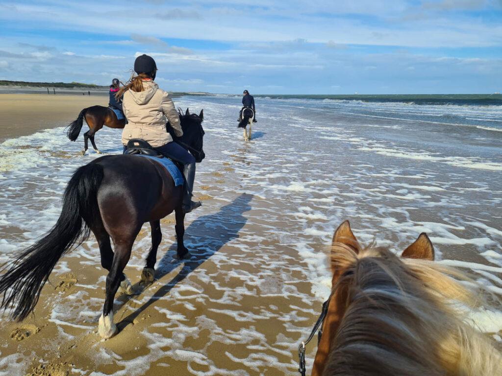 Paardrijden aan zee in Nederland