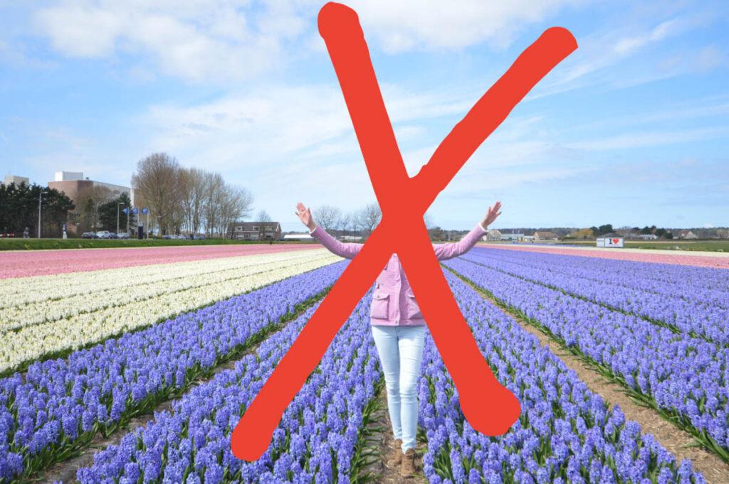 NOT DONE / Niet doen bij tulpenvelden bezoeken