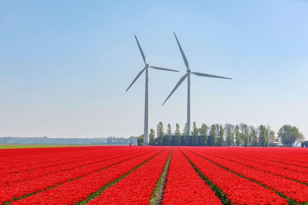 Mooiste tulpenroutes in Nederland met de auto