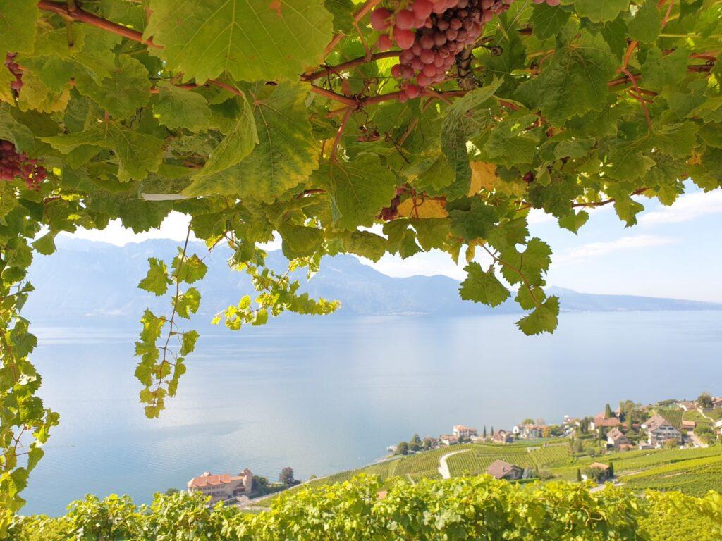 Wijnreis tips - Wijnreizen