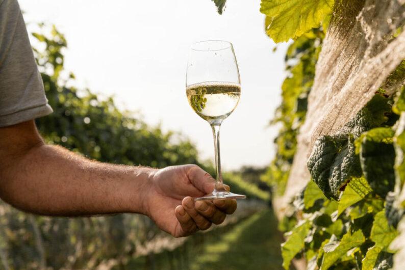 Mooiste wijngaarden in Nederland