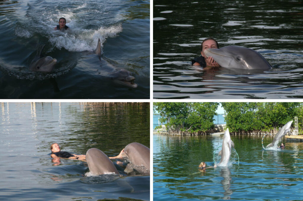Zwemmen met dolfijnen in Florida, Eilat en Curaçao