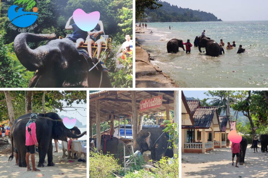 Olifanten wassen of rijden op olifanten in Thailand