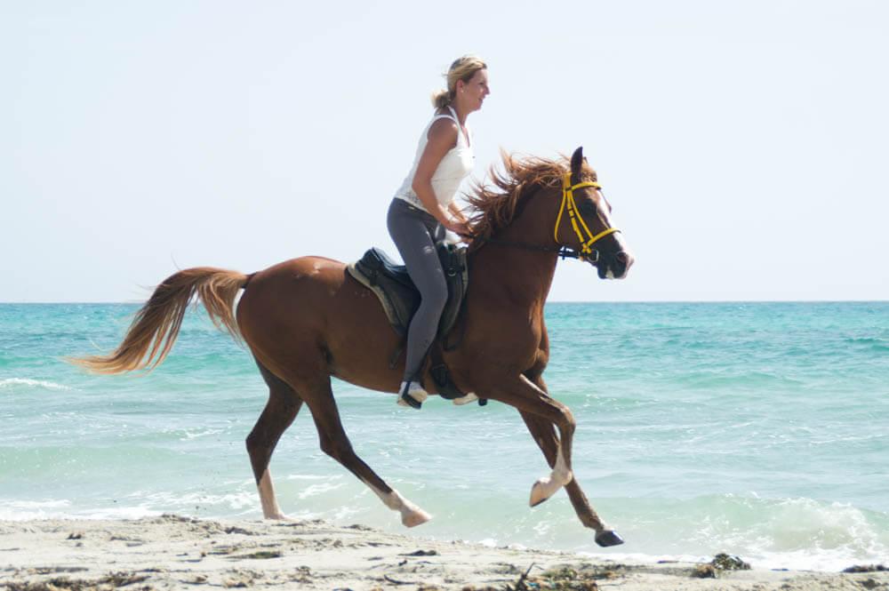 Arabisch paard - Djerba