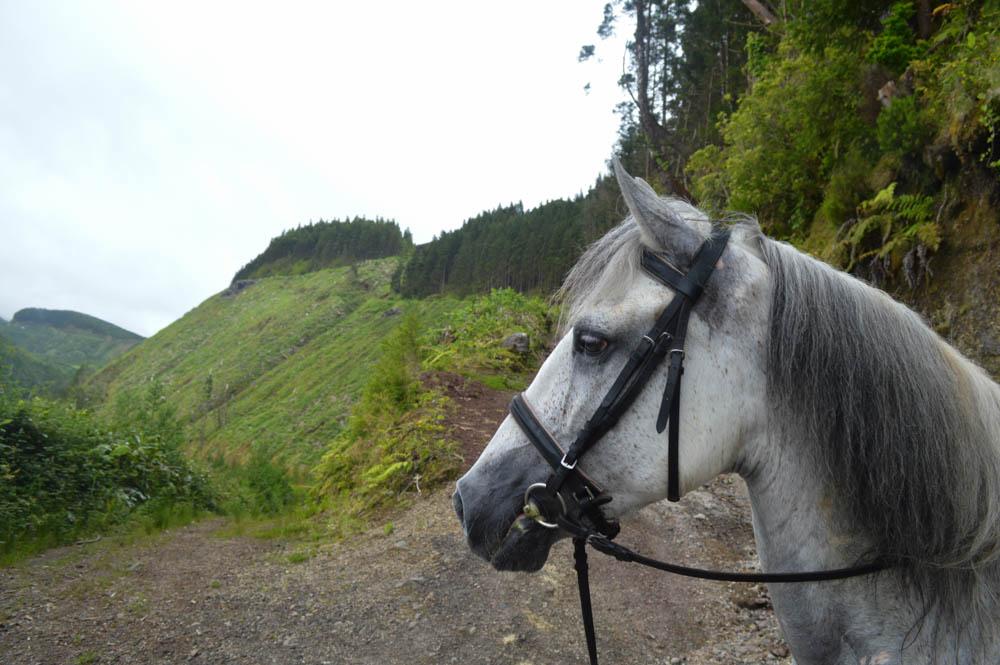 Sete Cidades, paardrijden