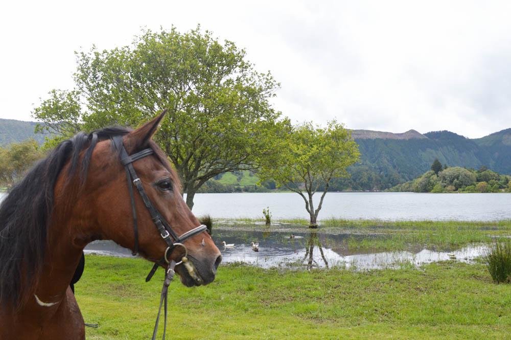 Paardrijden Azoren