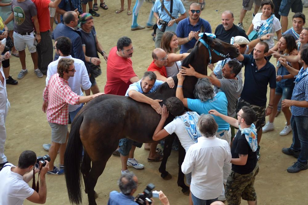 Het paard is de grote winnaar