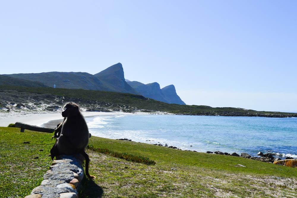 Buffels Bay - Zuid-Afrika