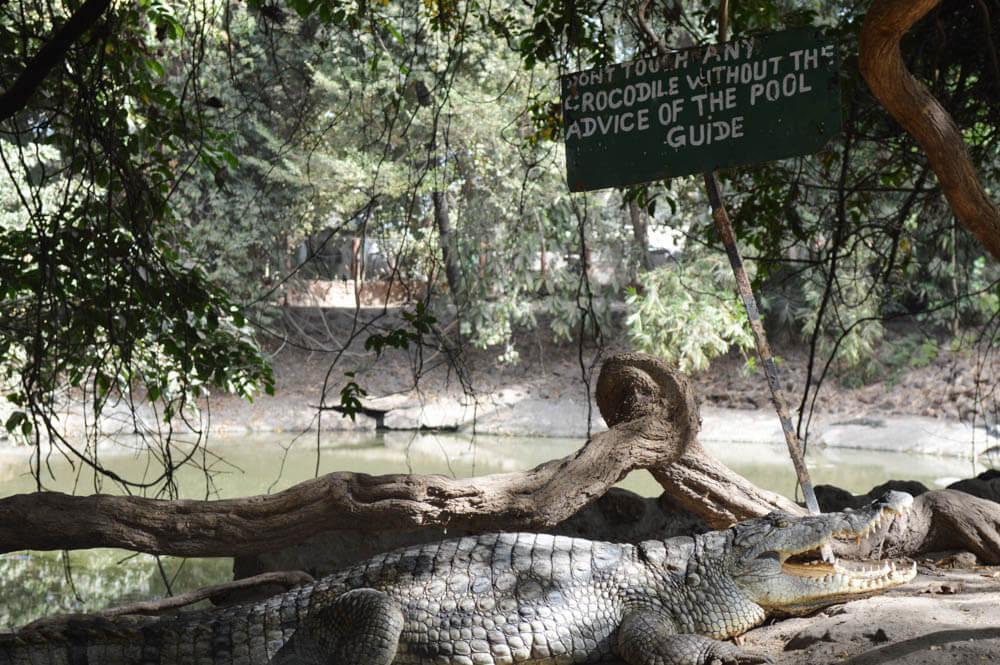 Crocodile Pool - Gambia