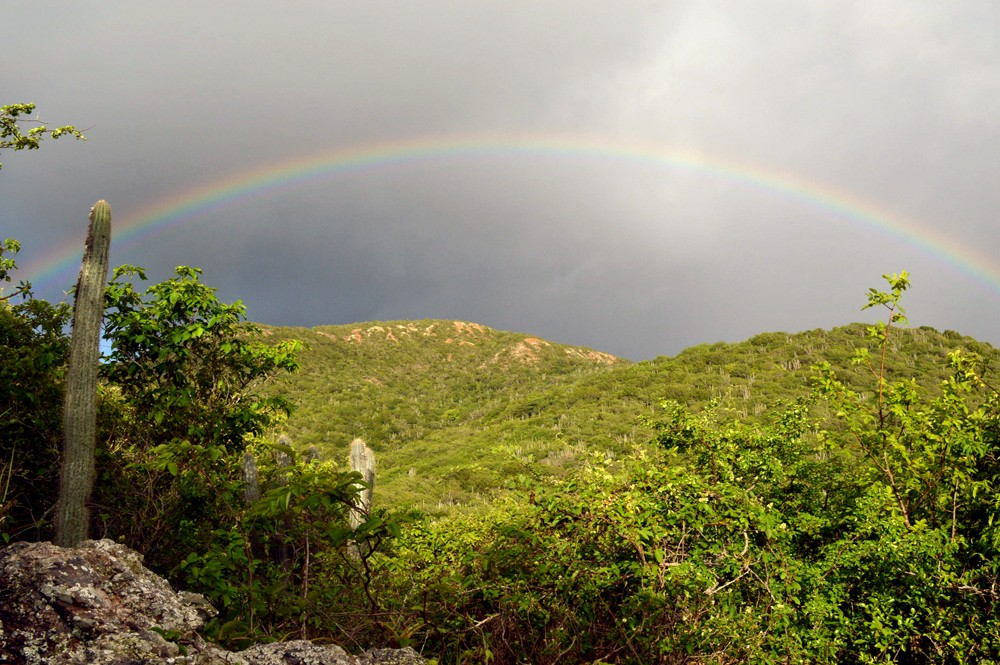 Curacao-Christoffelpark