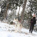 Husky dog trekking Thüringen