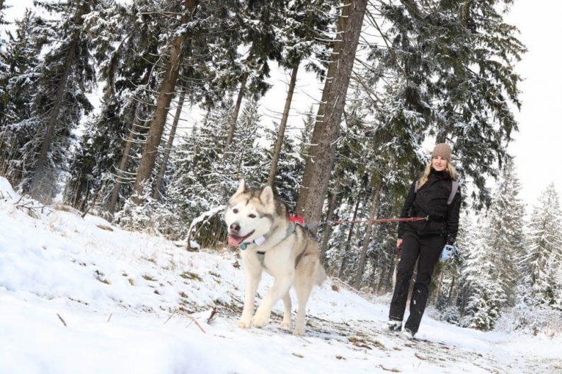 Husky dog trekking Thüringen, Duitsland