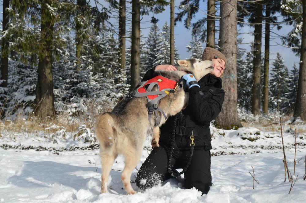 Dog trekking - Huskys - Duitsland