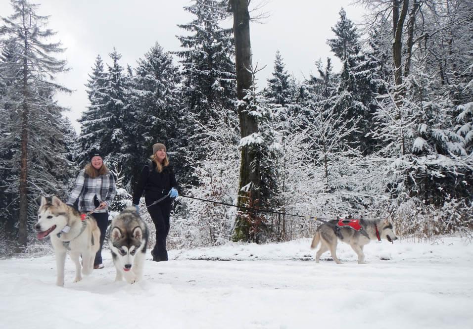 Dog trail met huskys