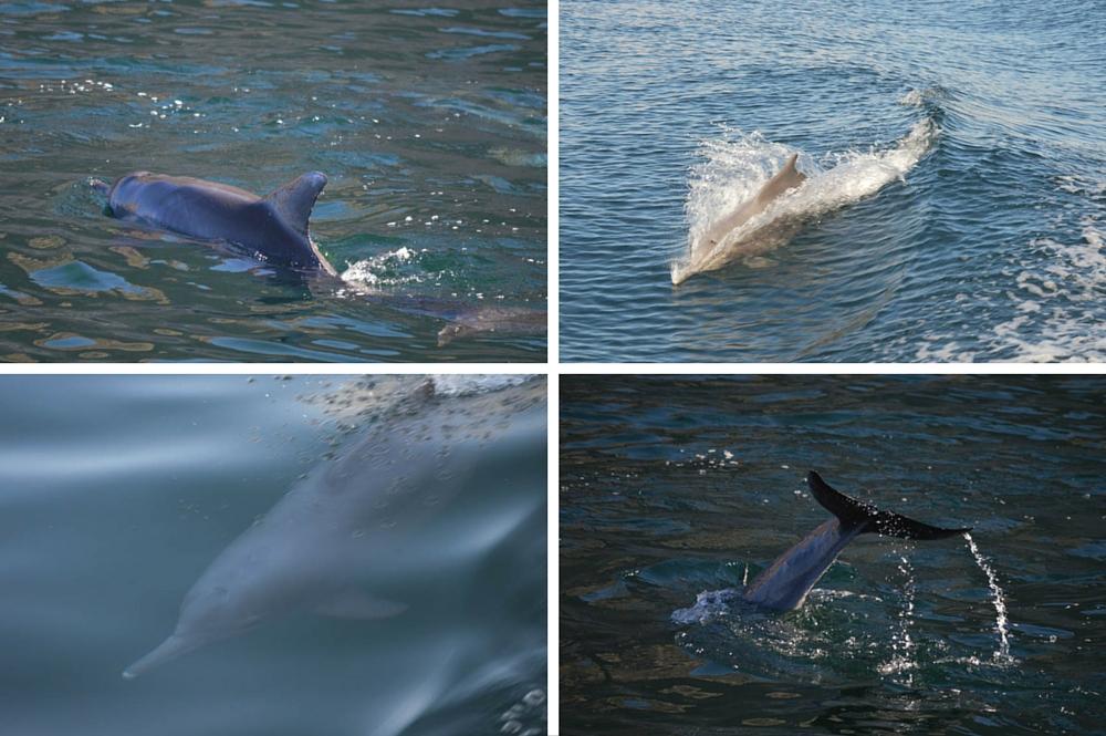Fjorden van Arabia - Dhow Cruise - Dolfijnen - Oman