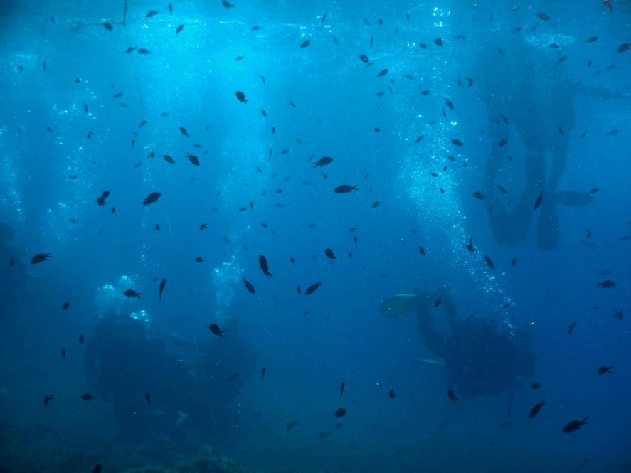 Visjes en duikers