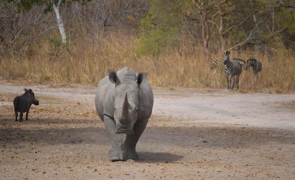 FATHALA NATIONAL PARK SENEGAL