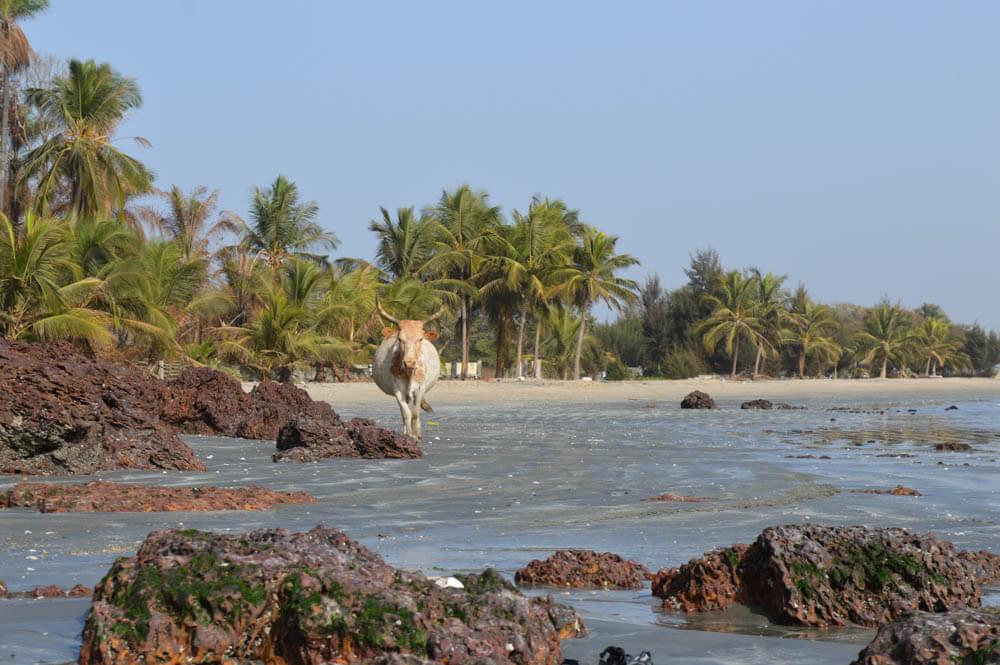 Zonvakantie naar Gambia