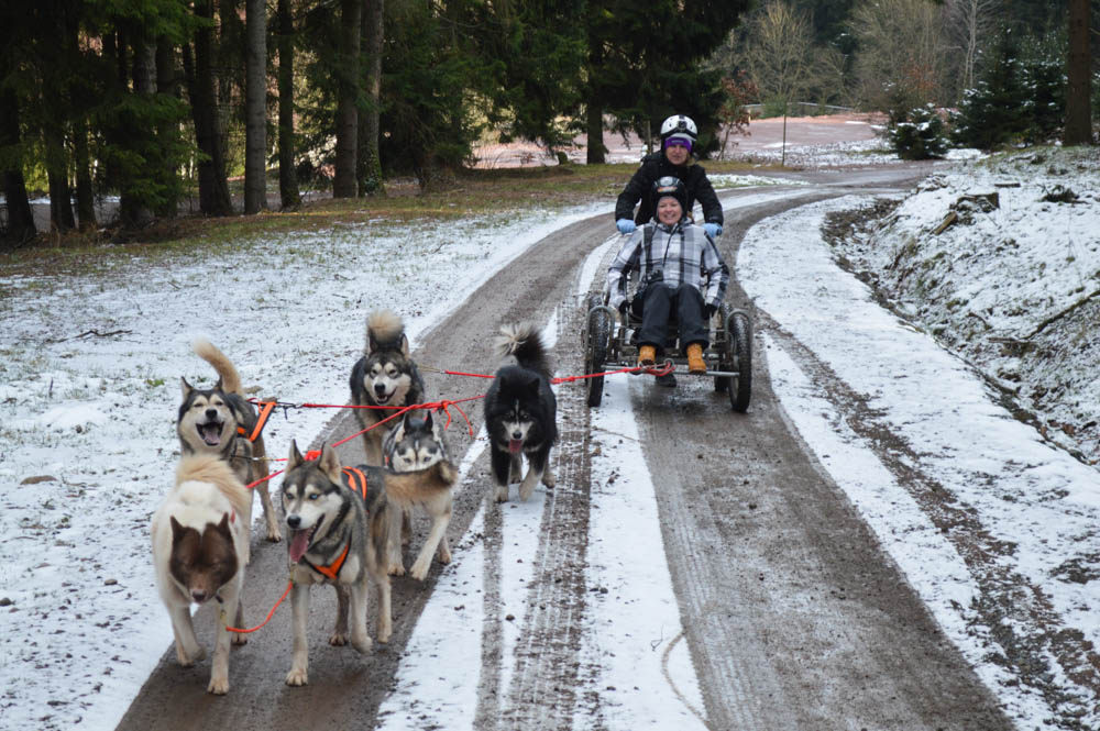 Huskywagen Thuringen