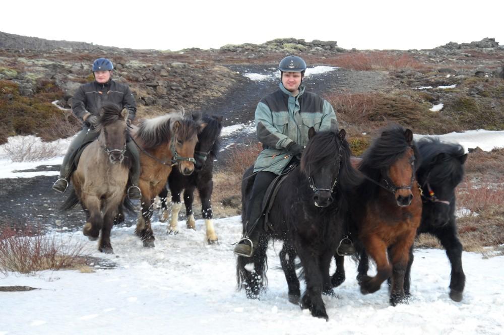 IJsland-paarden-natuur