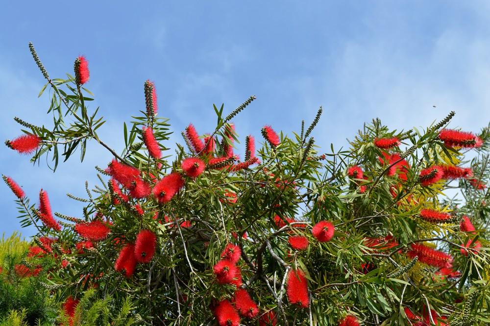 Israel-bloemen-natuur