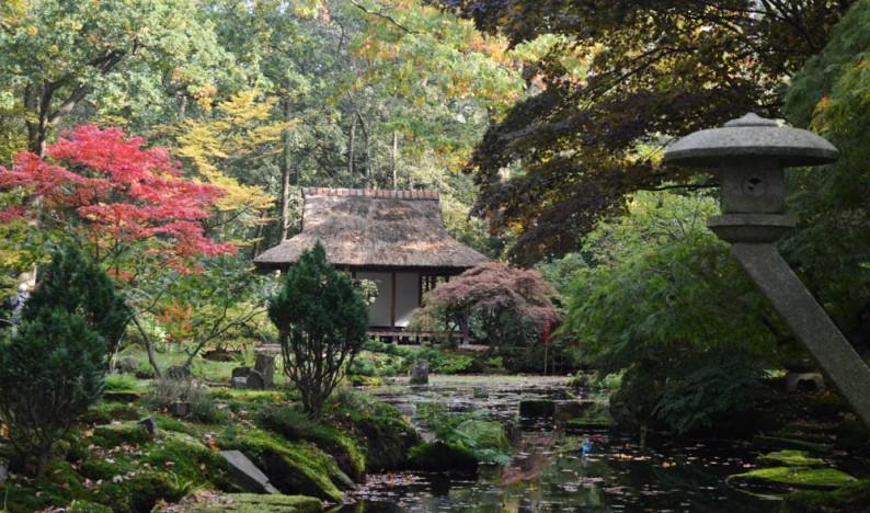 Bezoek gratis de Japanse Tuin in Den Haag