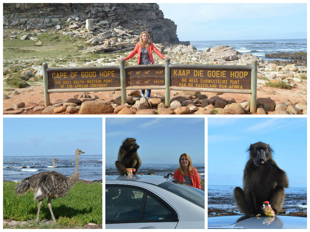 Roadtrip ontdek Kaapstad in 1 dag