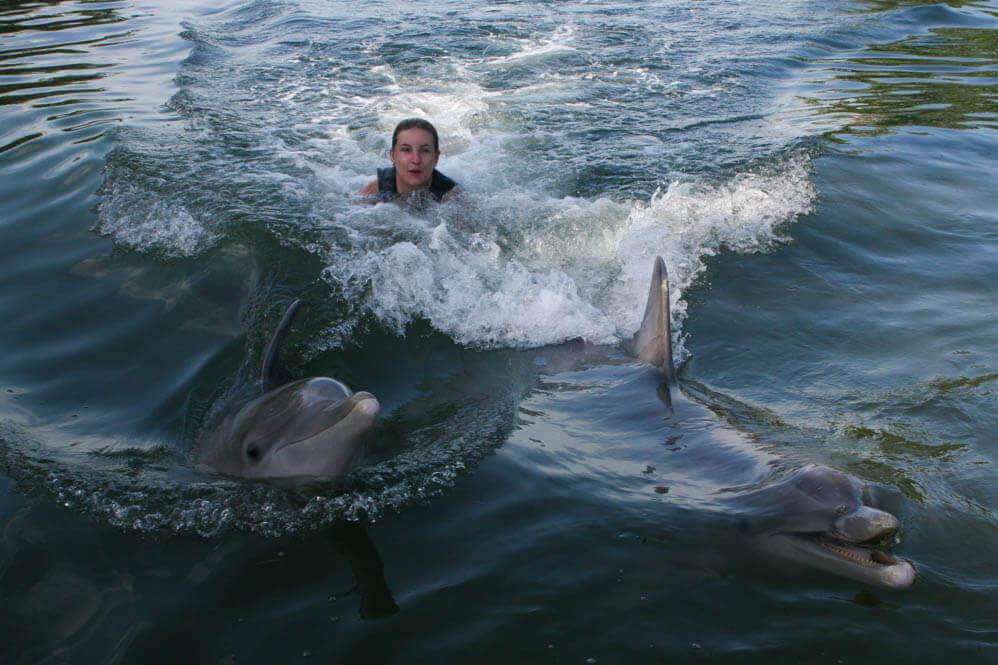 Key Largo - dolfijnen