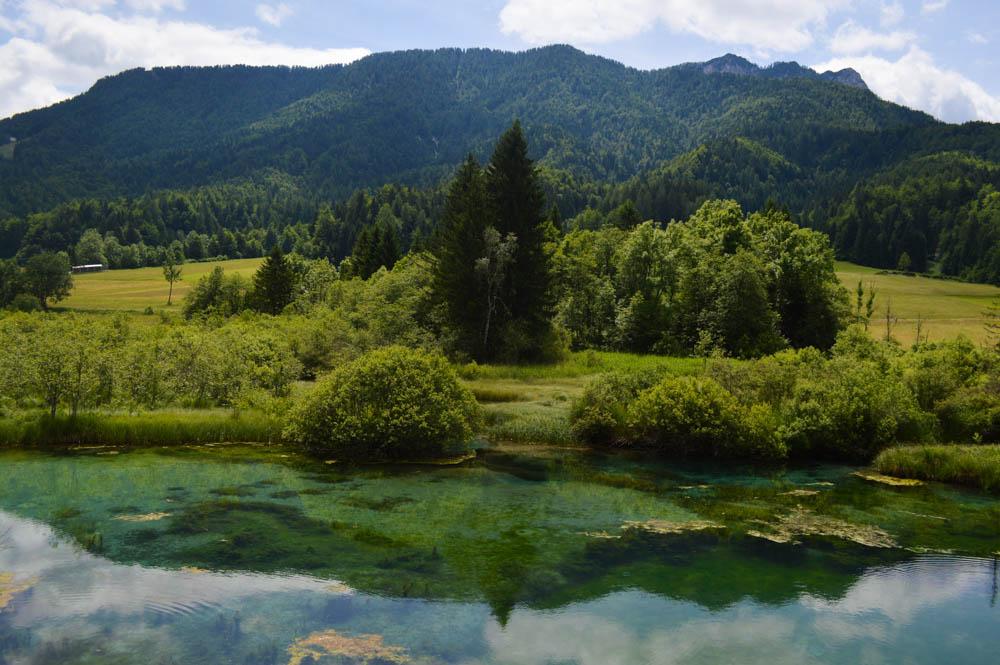Natuurreservaat Zelenci in Kranjska Gora