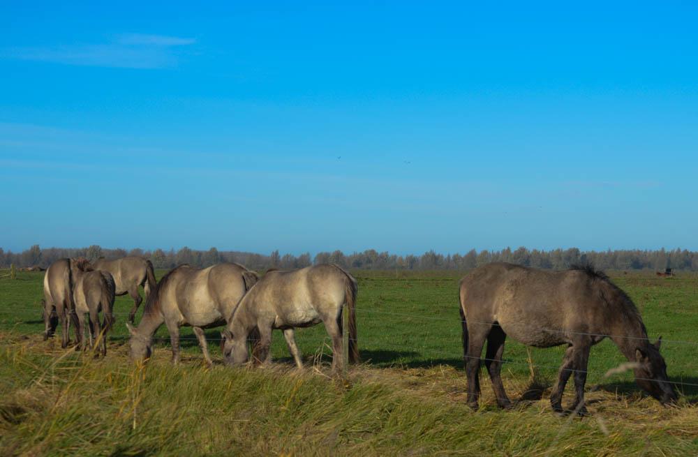Lauwersmeergebied - Friesland
