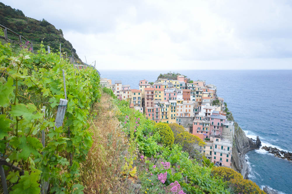 Wijnvelden en uitzicht op Cinque Terre