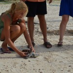 Fotoblog: Zeeschildpad vrijlaten op Koh Talu