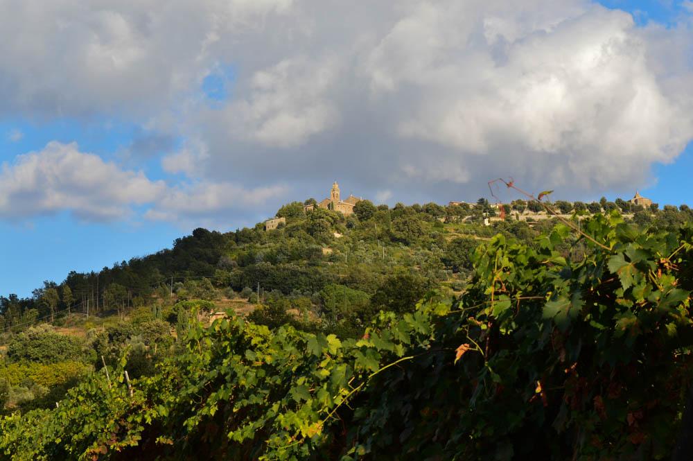 Wijn proeven bij Aziende Agricola Cerbaia