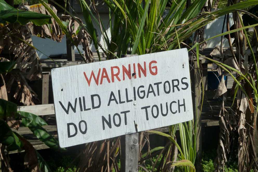Warning; Wild alligators