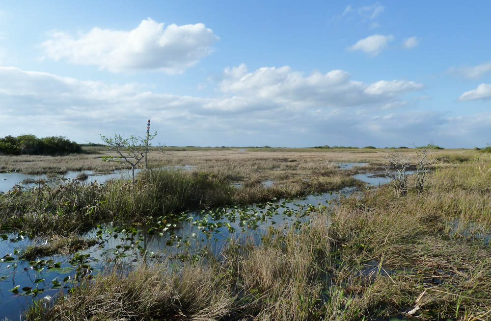 Krokodillen spotten Everglades
