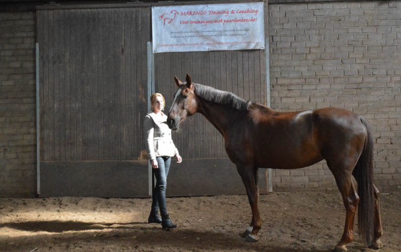 Paardencoaching-mediation-paarden-training