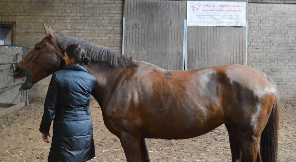 Mediation en coaching met paarden