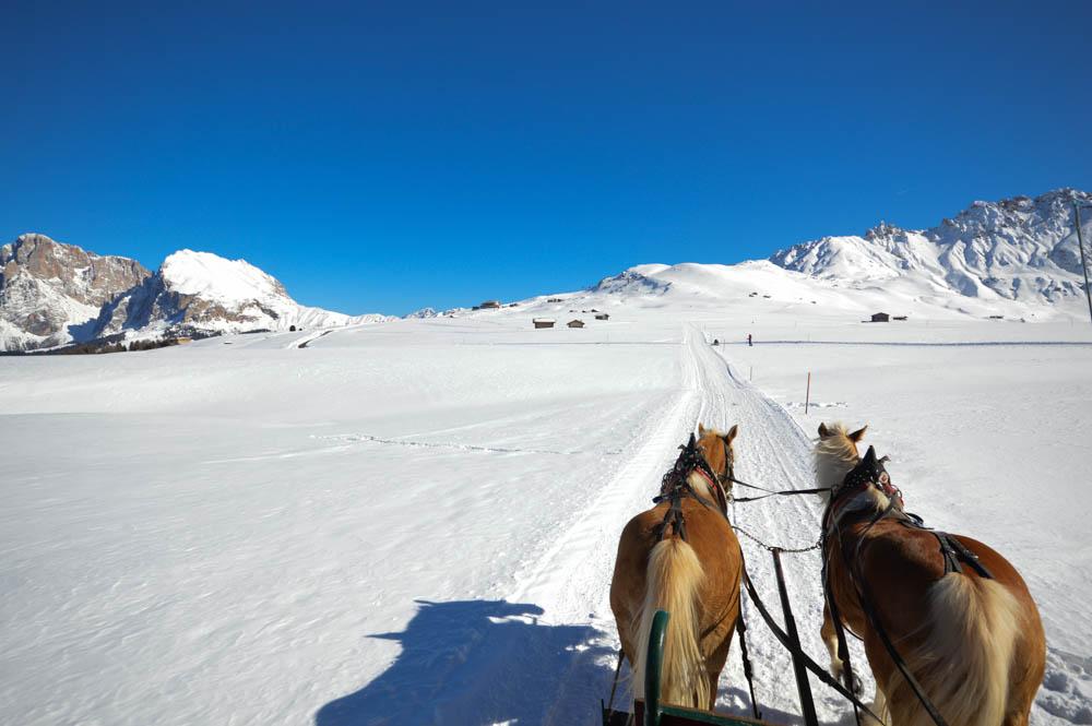 Paardenslee- Zuid Tirol