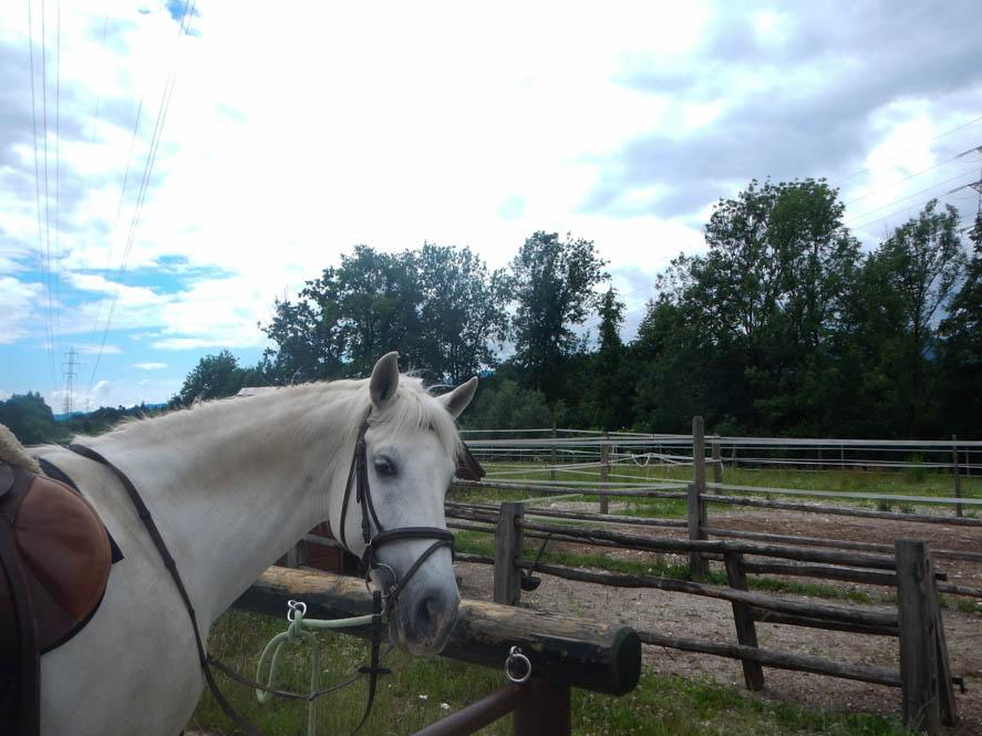 Paardrijden in Radolca - Slovenie