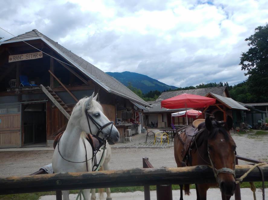 Paardrijden Radolca