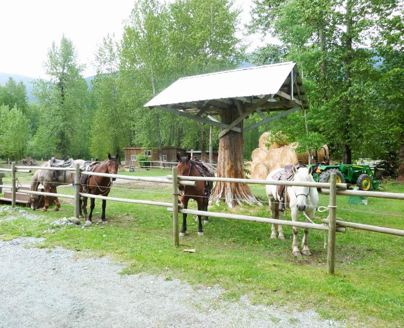 Paardrijden Canada