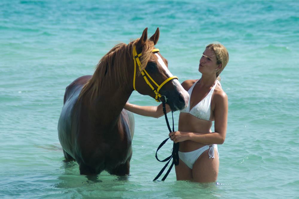 Zwemmen met paarden - Djerba - Tunesië