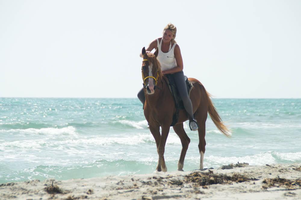 Volbloed Arabische hengst