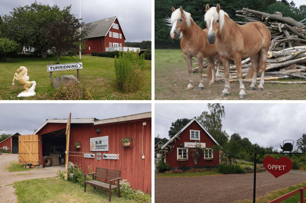 Paardrijden in Zuid Zweden