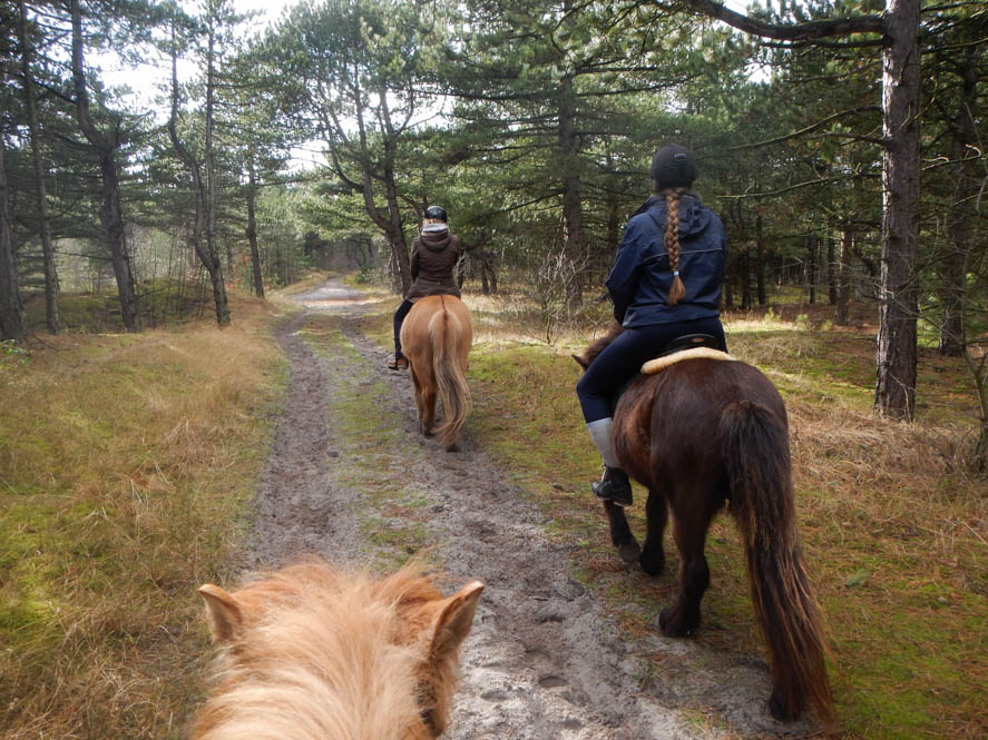 Paardrijden op IJslanders op Vlieland