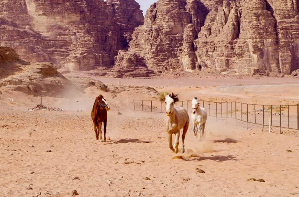 Paardrijden in woestijn Jordanië