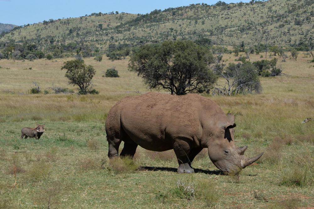 Fotoblog: Pilanesberg NP