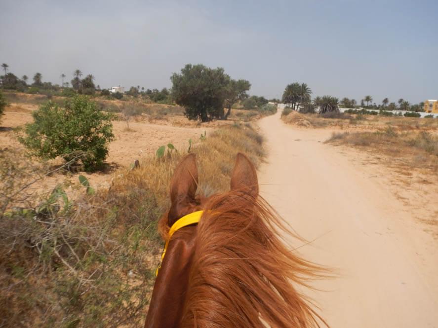 Paardrijden op een Arabier