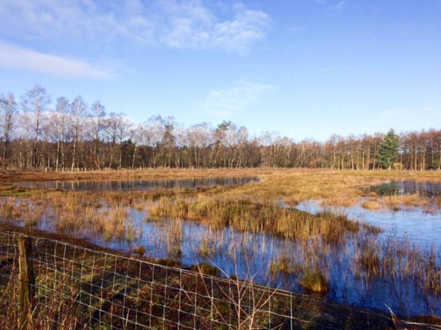 Dreilandersee Gronau
